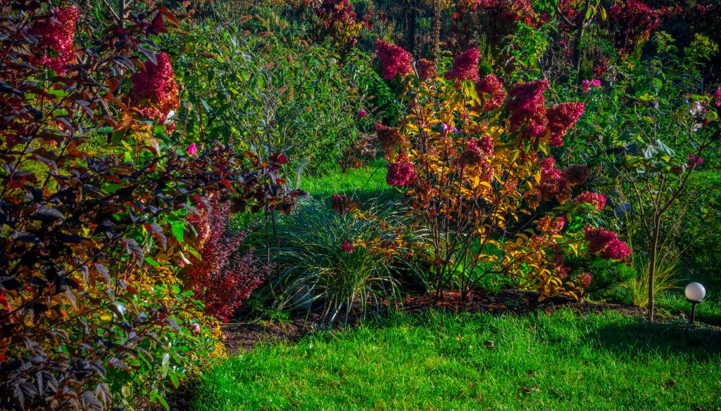 Autumn in garden